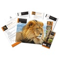 Adopt a Big Cat Gift Box 2
