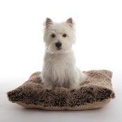 In Vogue Pets - Pooch Pad Dog Pillow - Brown