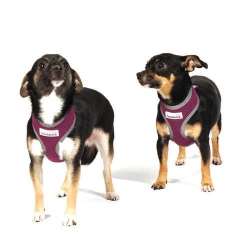 Reflective Airmesh Dog Harness – Purple 4