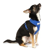 Doodlebone - Airmesh Dog Harness – Royal Blue