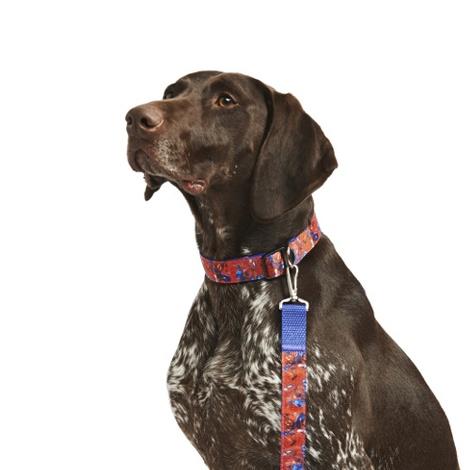"Spiderman Dog Collar  1"" Width 2"