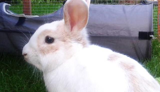 Ingleby Bunny & Guinea Pig Boarding 5