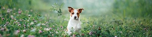 Dog-friendly North Lanarkshire