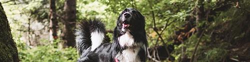 Dog-friendly Glasgow