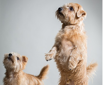 Rufus & Heidi