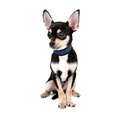 Dog Cooling Collar in Pacific Blue 2