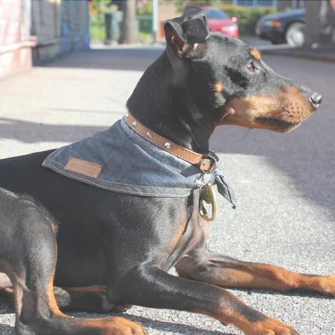 Hobo Denim Dog Bandana 4