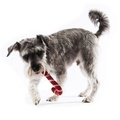 Wool Candy Cane Dog Toy 4