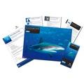 Adopt A Shark Gift Box 2