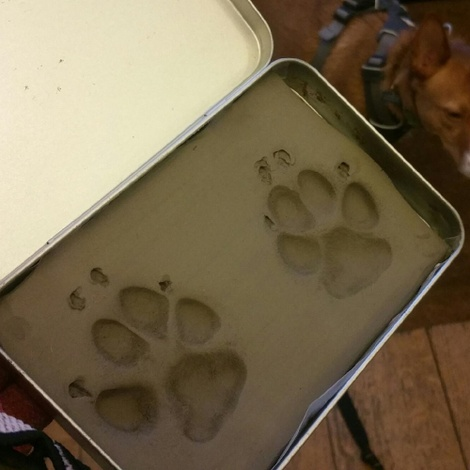 Framed Personalised Paw Mould 4