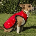 Brighton Bubble Hoodie Dog Coat - Red 3