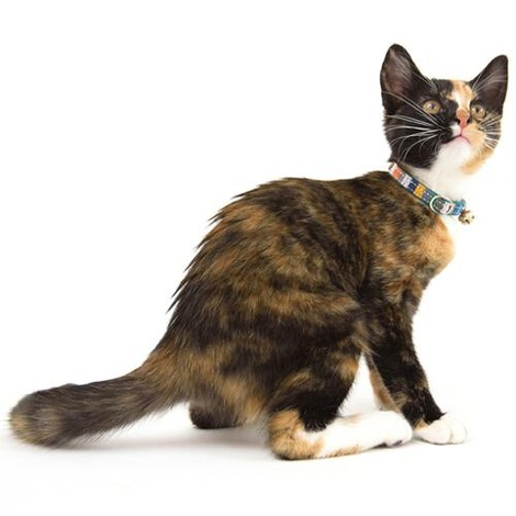 Kikoy Marine Stripe Cat Collar 3