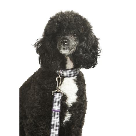 Wesley Dog Collar 2