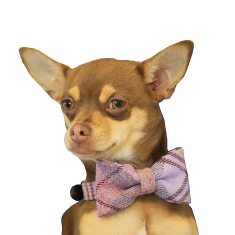 Pink Shetland Wool Dog Bow Tie 3