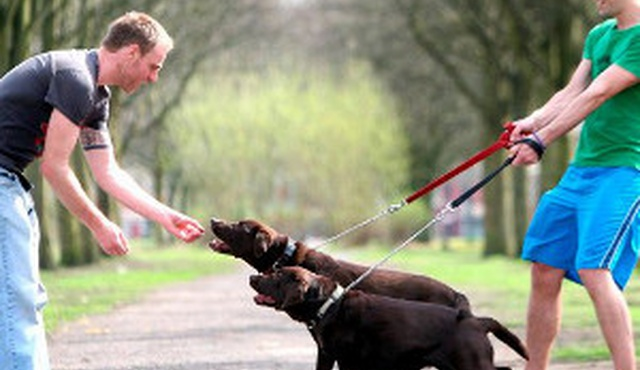 Dog Training in London