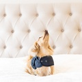 Pink Shetland Wool Waxed Dog Coat 6