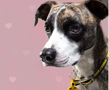 PetsPyjamas Charities