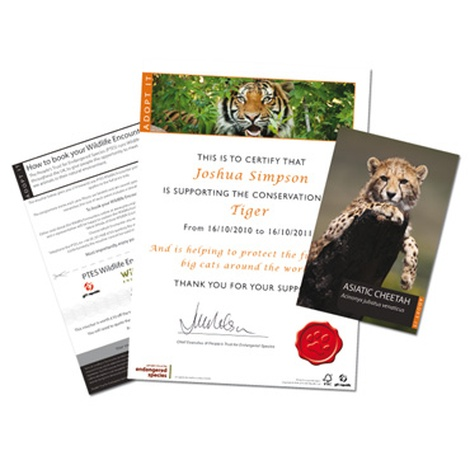 Adopt a Big Cat Gift Box 3