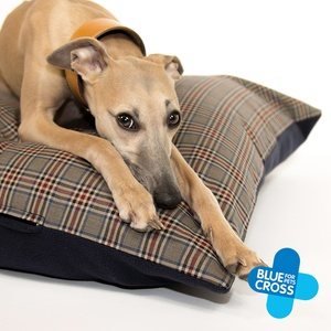 Explore our collection of fabulous doggie toys, treats & accessories