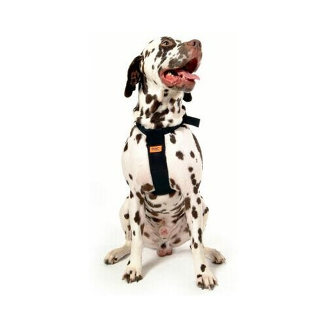 RAC Dog Car Harness