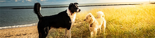 Dog-friendly East Sussex