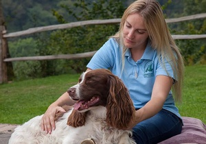 Holistic Retreat For You And Your Dog, Wales 3
