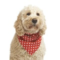 Polka Dot Dog Bandana - Red