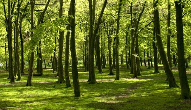 Warley Woods 3