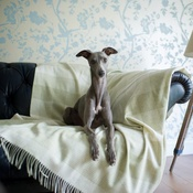 The Lounging Hound - Patterned Merino Wool Throw - Springtime