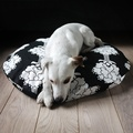 Cushion and Bed - Alfons 4