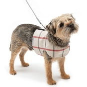 Mutts & Hounds - Nottingham Check Harness