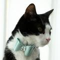 Cat Collar Bow Accessory - Sea Spray 2