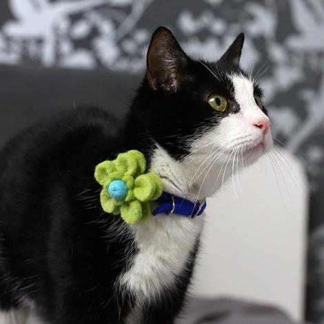 Bloom Cat Collar Flower Accessory - Lime & Aqua 4