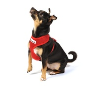 Doodlebone - Airmesh Dog Harness – Red