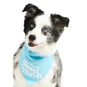 Pet Pooch Boutique - Been There Chewed That Dog Bandana – Blue