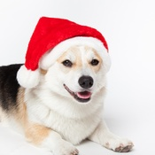 Doggy Things - Doggy Things Santa Hat