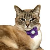 Love from Lola - Bloom Cat Collar Flower Accessory - Lavender & Duck Eg