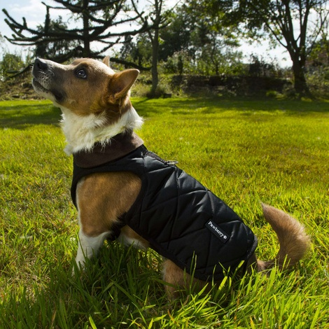 Chelsea Winter Warmer Dog Coat - Black 3