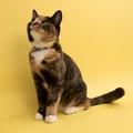 Blue Geo Cat Collar 5