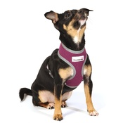 Doodlebone - Reflective Airmesh Dog Harness – Purple