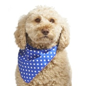 Pet Pooch Boutique - Blue Polka Dot Dog Bandana