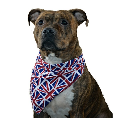 Dog Bandana - Union Jack