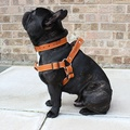 Tan Brown Leather Dog Harness 3