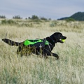 DayPak Backpack for Dogs - Green 4