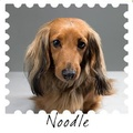 Canine Spa Kit  3