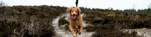 Dog-friendly North Wessex Downs