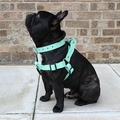 Pale Green Leather Dog Harness 2