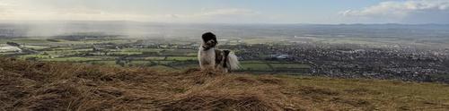 Dog-friendly North Yorkshire