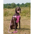 Comfort Dog Harness – Pink 2