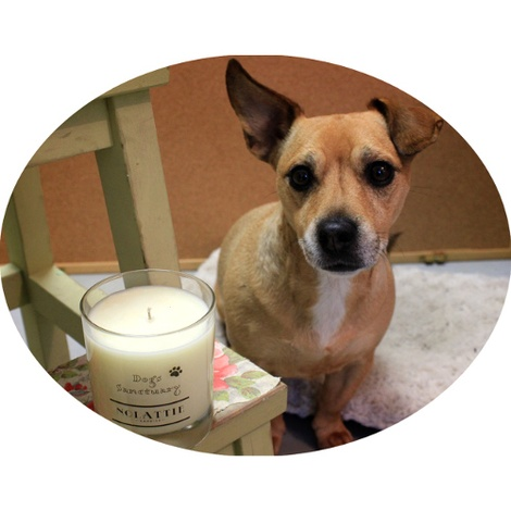Dogs Sanctuary Calming Candle 3
